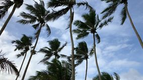 Palm trees against blue sky in a windy day by sea stock video footage