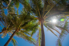 Palm trees against bluy sky and sun Royalty Free Stock Photography