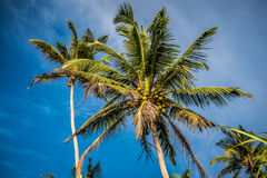 Palm trees against bright blue sky Royalty Free Stock Image