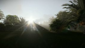 Palm trees against morning sun, panning. Hd video stock video footage