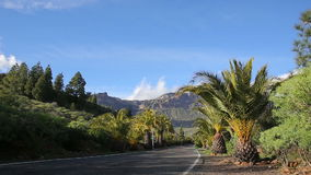 Palm trees against moutain landscape. On a sunny day stock video footage