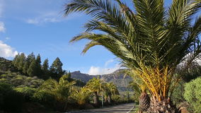 Palm trees against moutain landscape stock footage