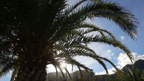 Palm trees against moutain landscape. On a sunny day stock video