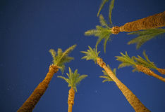 Palm trees against night sky. Several palm trees against night sky Stock Images