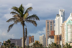 Palm Trees Against Overcast City Skyline in Durban Stock Images