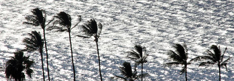 Palm trees against sea backgrond Stock Images