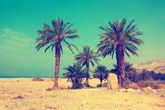 Palm trees against sea in a dessert. Retro background with palm trees against sea in dessert Stock Image