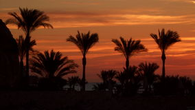 Palm trees against the sky at dawn stock footage