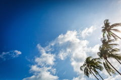 Palm trees against the sky Royalty Free Stock Photos