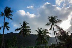 Palm trees against the sky Royalty Free Stock Photography