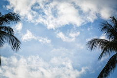 Palm trees against the sky Royalty Free Stock Images
