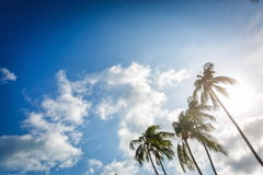 Palm trees against the sky Stock Images