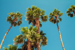 Palm trees against sky Stock Photos