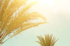 Palm trees against sky. retro style image. travel, summer, vacation and tropical beach concept. Stock Photos
