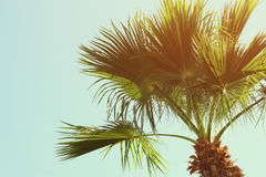 Palm trees against sky. retro style image. travel, summer, vacation and tropical beach concept Royalty Free Stock Photography