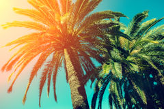 Palm trees against sky. At sunset Royalty Free Stock Image