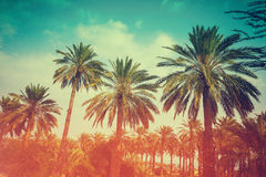 Palm trees against sky. At sunset light Royalty Free Stock Photos