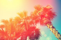 Palm trees against sky. Vintage frame with tropic palm trees against sky Stock Photo