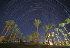 Palm trees against star trails in night sky. Night in Egypt: palm trees against star trails in night sky Stock Images