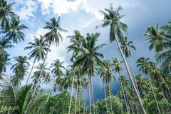 Palm trees against stormy sky. Samui island, Thailand Royalty Free Stock Images