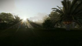 Palm trees against sun rising. Hd video stock footage