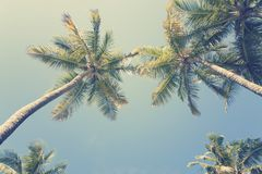 Sunny tropical sky Stock Images