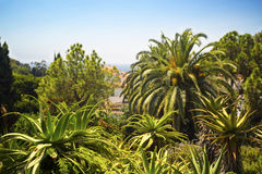 Palm trees and agaves Royalty Free Stock Photos