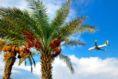 Palm trees and an airplane Stock Photo