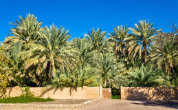 Palm trees in Al Ain Oasis Royalty Free Stock Image
