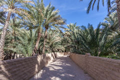 Palm Trees in the Al Ain Oasis Royalty Free Stock Photography