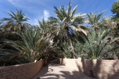 Palm Trees in the Al Ain Oasis Stock Photos