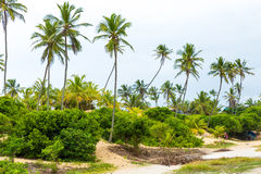 Palm Trees at Aldeia dos Hippies in Bahia, Brazil Stock Images