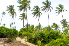 Palm Trees at Aldeia dos Hippies in Bahia, Brazil.  Royalty Free Stock Photography