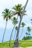 Palm Trees at Aldeia dos Hippies in Bahia, Brazil Royalty Free Stock Photography