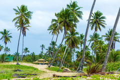 Palm Trees at Aldeia dos Hippies in Bahia, Brazil.  Stock Images