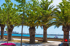 Palm trees in Alghero sea front Royalty Free Stock Image