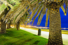 Palm trees in Alghero seafront by night Royalty Free Stock Image