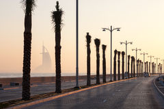 Palm trees alley in Dubai Stock Photography