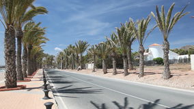 Palm trees alley in Spain stock footage