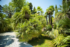 Palm-trees alley in tropical garden Stock Photo
