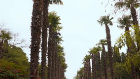 Palm trees along the avenue stock footage