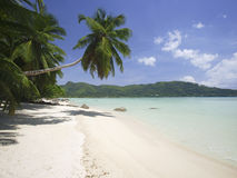 Palm trees along beach, Anse A La Mouche, Mahe`, Seychelles Stock Images