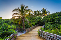 Palm trees along a boardwalk in Singer Island, Florida. royalty free stock photography