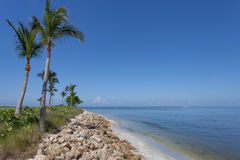 Palm Trees Along Captiva, Florida. Palm trees along the tropical coast of Captiva Island, Florida Stock Images