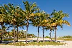 Palm trees along coast Stock Photos