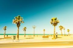 Palm trees along the coast in Cadiz at beautiful sunny day. Royalty Free Stock Photos