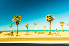Palm trees along the coast in Cadiz at beautiful sunny day. Royalty Free Stock Images