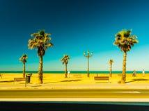 Palm trees along the coast in Cadiz at beautiful sunny day. Stock Photos