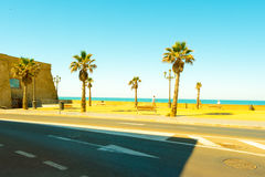Palm trees along the coast in Cadiz at beautiful sunny day. Stock Images