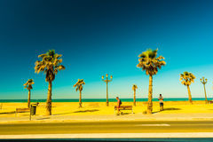 Palm trees along the coast in Cadiz at beautiful sunny day. Image of tropical vacation and sunny happiness. Filtered vintage photo Royalty Free Stock Photo